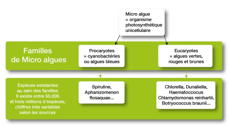 les différentes espèces de micro-algues