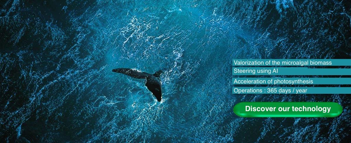 eutrophisation des eaux marines en france